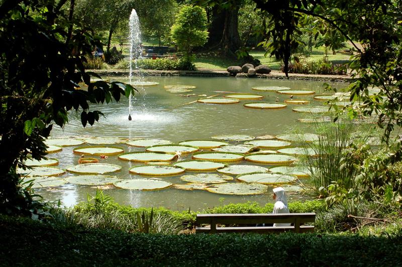 Bogor Botanic Gardens lily pond - Jakarta, Bogor, Bandung