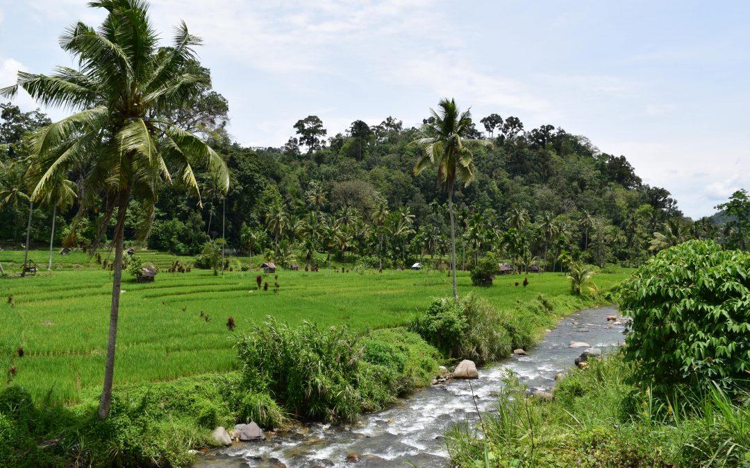 A Tour through West Sumatra