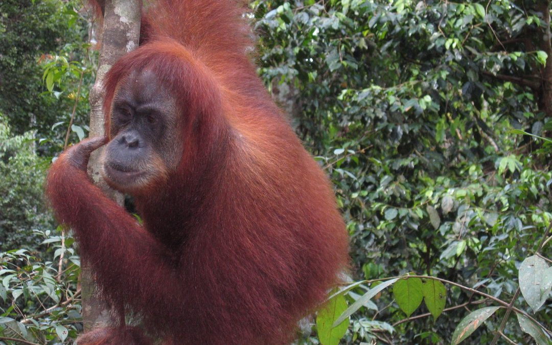 Bohorok / Bukit Lawang in  Gunung Leuser National Park Sumatra Tours –Scenic Views of Nature