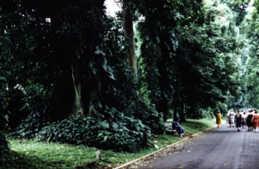 bogor - Jakarta, Bogor, Bandung