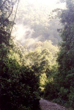 brastagi-jungle