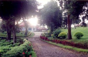 kerinci tea garden - The Kerinci National Park