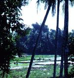 sawa1a - Medan in Literature